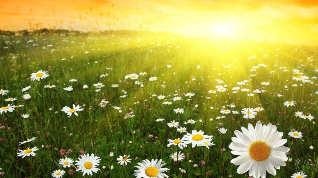 21 червня – День літнього сонцестояння: що обов'язково потрібно зробити в цей день