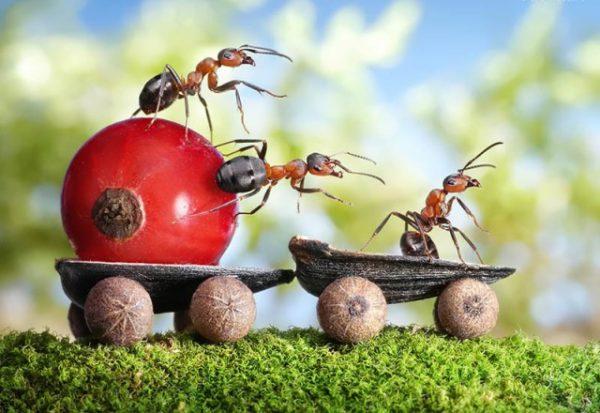 Як швидко позбутись від мурах: 3 простих, але дуже ефективних способи