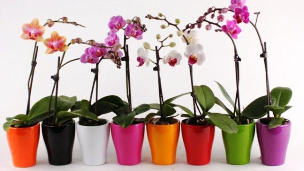 Пересаджуємо орхідею: корисні поради для краси та довголіття вашої квітки
