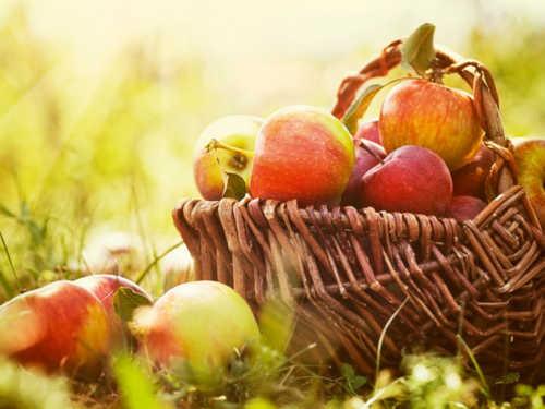 Головні традиції Яблучного Спаса: що неодмінно слід зробити в цей день